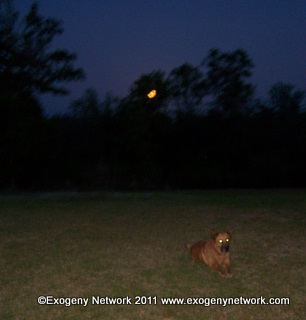 Rising moon and Red Dog